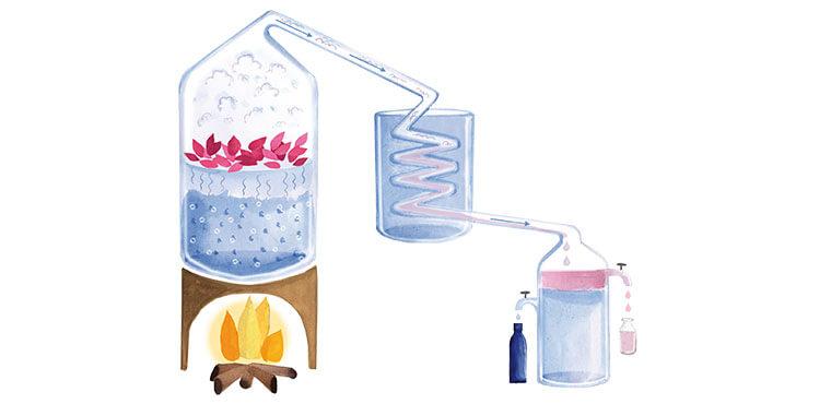 hidrolat destilacija