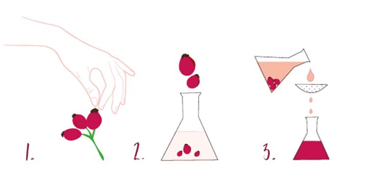 Standardi za trajnostno obiranje šipkovih cvetov in plodov