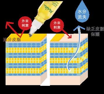皮膚層層保濕鎖水