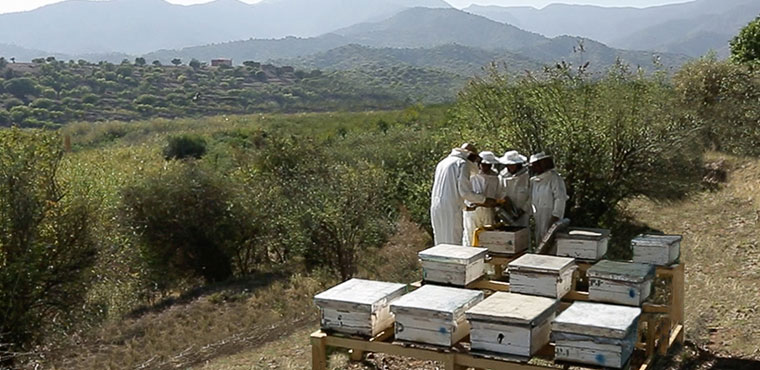 The Argan Bees project in video