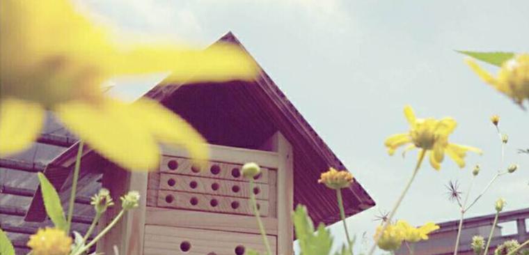 Start Organic 城市養蜂是必要的