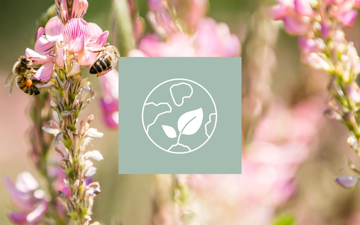 ekološka kozmetika Melvita - čebele