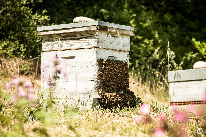 med - čebele - Melvita