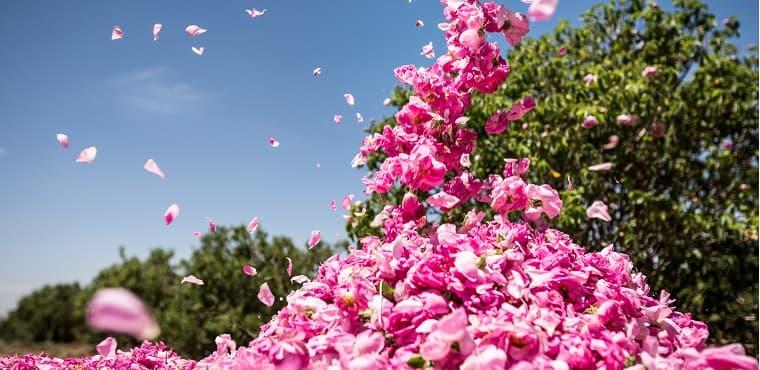 eau florale de rose bio Melvita
