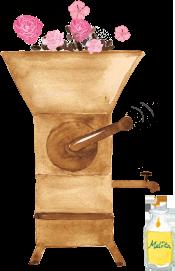 萃取摩洛哥堅果油