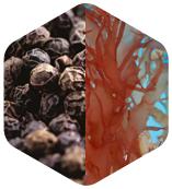 黑胡椒/海藻