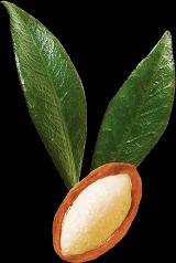 アルガンオイル