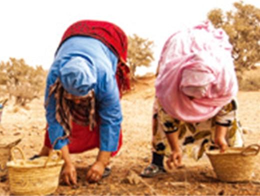 専用農地で栽培し、豊かに育った実を厳選して収穫。