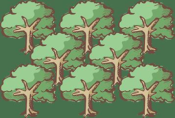 アルガンの木 100本
