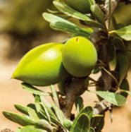 熟した実の収穫