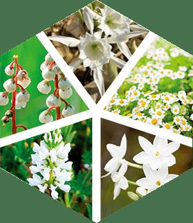 ブライトケアをサポートする5種の純白花