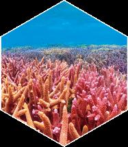 サンゴの美しい海