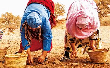専用農地で栽培し豊かに育った実を厳選して収穫