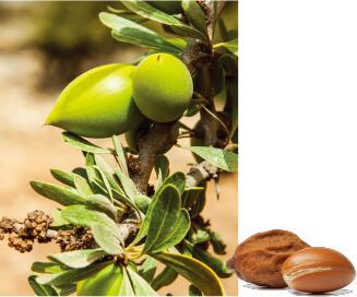 摩洛哥堅果樹